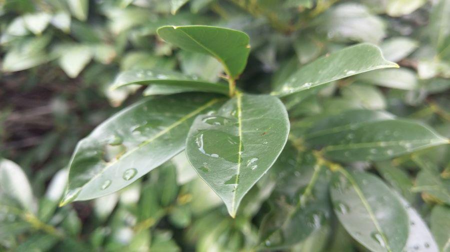 Leaf Water
