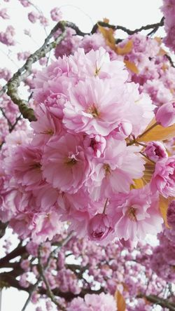 tenderness Природа цветы цветение весна сакура розовый аромат Flower Pink Color Beauty In Nature Nature Botany The Great Outdoors - 2018 EyeEm Awards