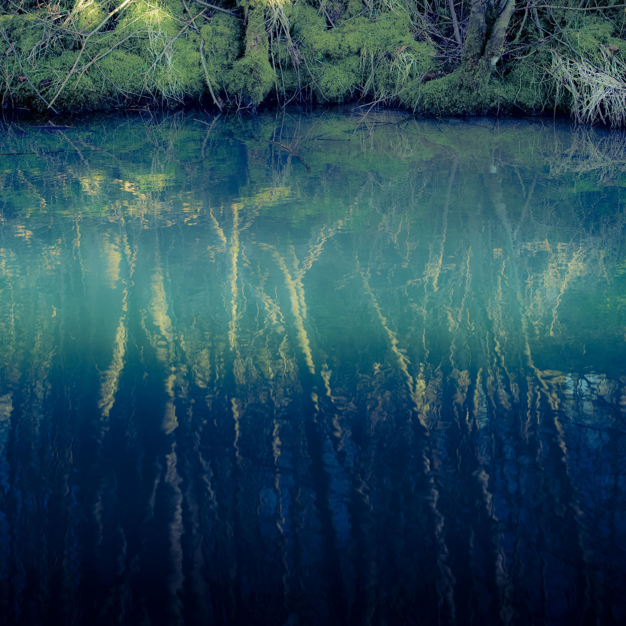 water, reflection, lake, beauty in nature, tranquility, nature, no people, day, waterfront, tranquil scene, scenics - nature, outdoors, idyllic, underwater, tree, full frame, surface