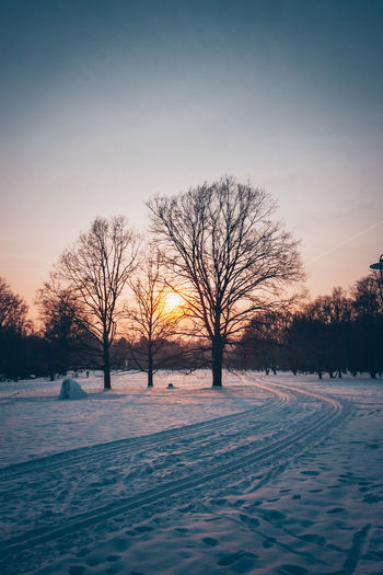 Bare trees on snow covered field during sunset