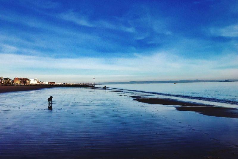 Dogs Of EyeEm Dogonbeach Portobello Beach, Edinburgh Saturday Walk Cloud - Sky The Great Outdoors - 2017 EyeEm Awards The Week On EyeEm The Week On EyeEm Your Ticket To Europe