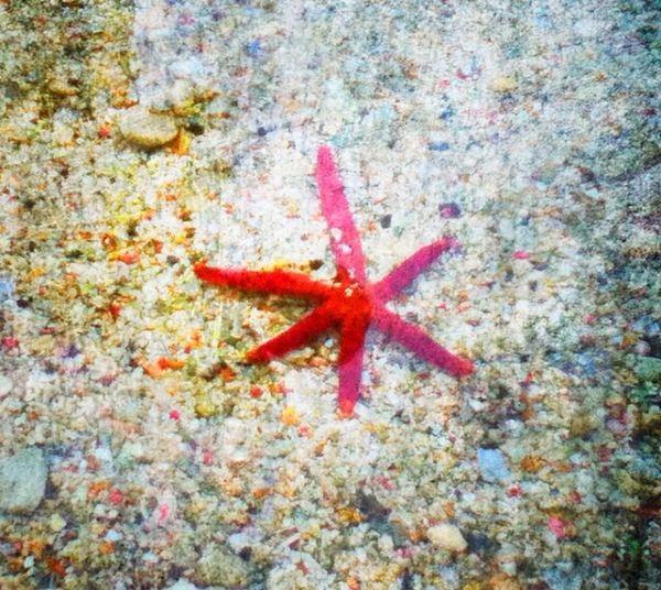Holydays, star of sea