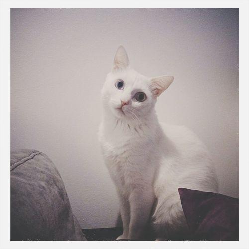 My cat Hercule Cute Pets