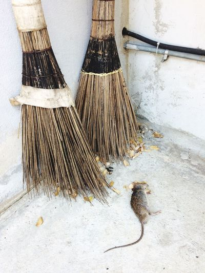 EyeEm Selects Broom Cleaning Sweeping Domestic No People Cleaning Equipment Indoors  Nature Day Death Rat