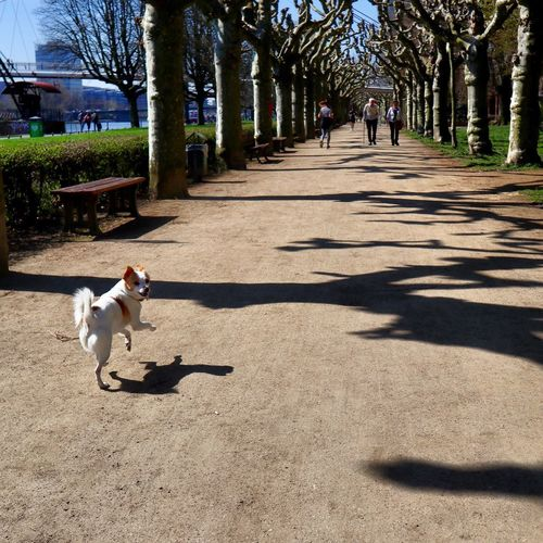 Tree Shadow Sunlight Plant Real People Nature Leisure Activity Outdoors Adult Dog People One Animal Lifestyles Sitting Men Full Length Vertebrate Park Day