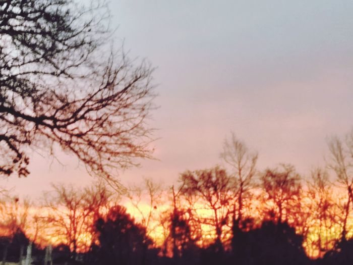 Tree Sunset Nature Scenics Beauty In Nature Tranquil Scene Vibrant Color Winter 3XSPUnity EyeEm OklahomaStrong 3XSPUnity 3XSPhotographyUnity 3XSPhotographyUnity 3XSPhotographiUnity Oklahomabeauty Ranch Living EyeEm Gallery Happiness Okie From Muskogee Be. Ready. Nature Silhouette No People Cheerful EyeEm Selects 3XSPUnity Shades Of Winter