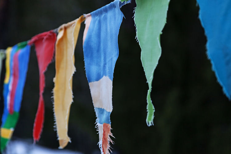 Close-up of clothes drying on wood