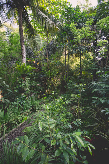 Another view of the path to the jungle teahouse Abundance Beauty In Nature Day Footpath Green Green Color Growing Growth Idyllic Jungle Landscape Leaf Lush Foliage Nature No People Non-urban Scene Outdoors Plant Scenics Sunlight Sunny Tranquil Scene Tranquility WoodLand