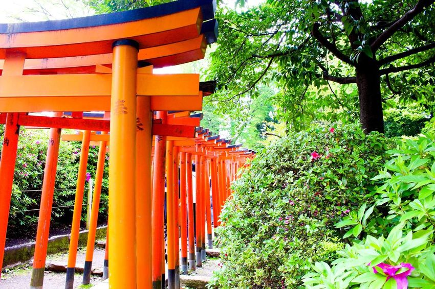 Check This Out Hello World Taking Photos Enjoying Life Taking Photos Japan Japan Photography Japanese Culture Japanese Style Shrine Shrine Of Japan