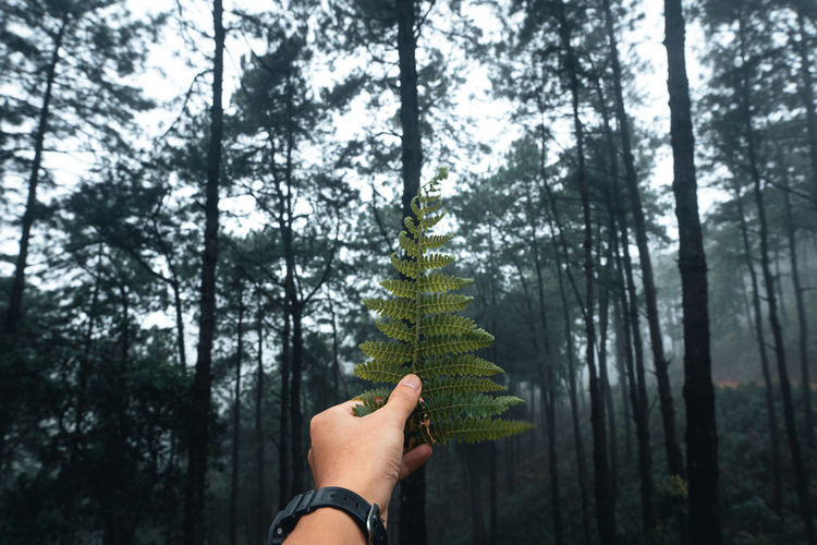 Midsection of person holding pine tree trunk in forest