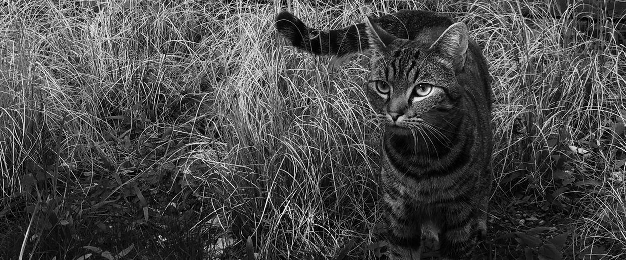 Cats Cat Wild Animal Wild Cute Pets Pets Nature Into The Wild I Love My Cat EyeEm Best Shots