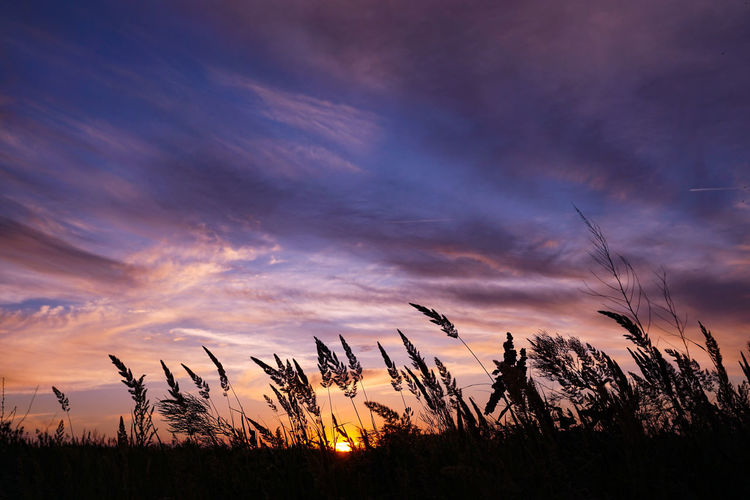 Silhouette plants on field against dramatic sky during sunset