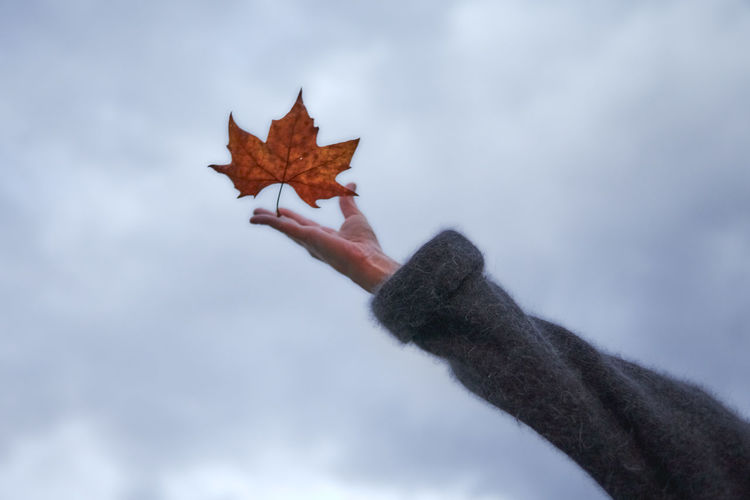 Person holding maple leaf during autumn