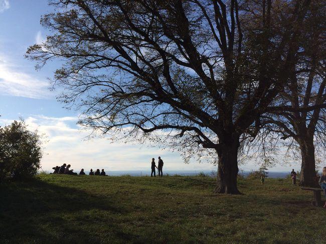 A New Beginning Tree Grass Field Nature Landscape Sky Scenics Outdoors Day Germany Reutlingen A New Beginning