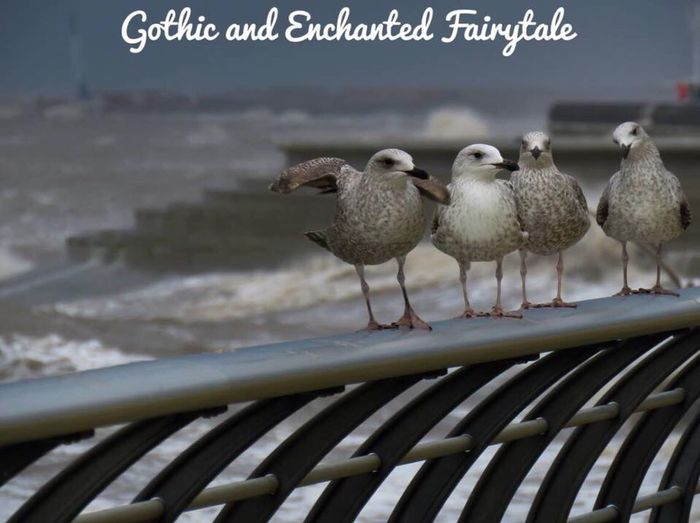 Perching Bird Seagulls And Sea Seagull Seagull Portrait Seagull Posing Seagull Art
