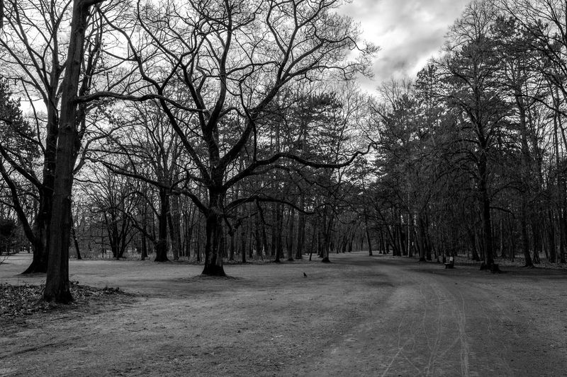 Bare trees in park against sky