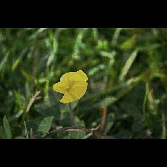 Only_spring_flowers Yelow Yellow Flower Garden Photography Garden Flower Collection FlowerloversFlowers,Plants & Garden Anamateucci