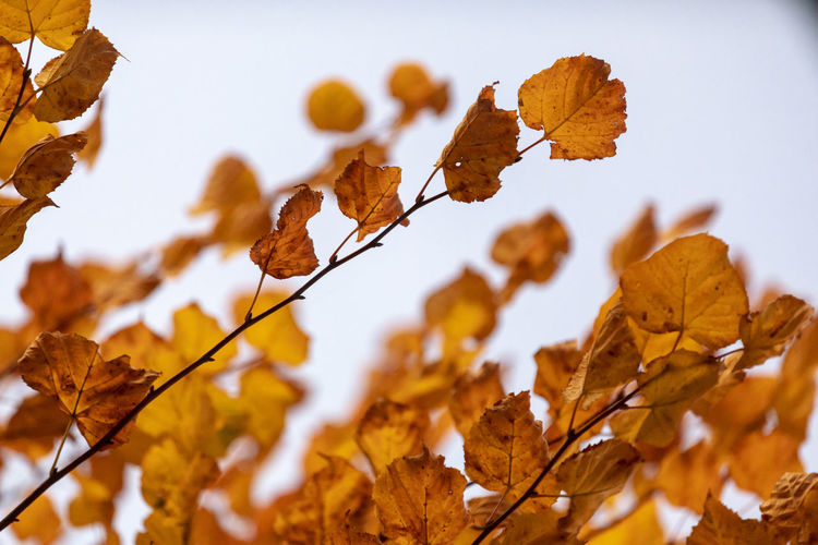Close-up of autumnal leaves against blurred background