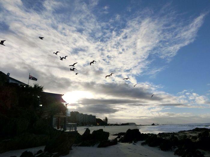 Sky Bird Outdoors No People Sunset Beauty In Nature Gold Coast Australia Currumbinbeach Traveling