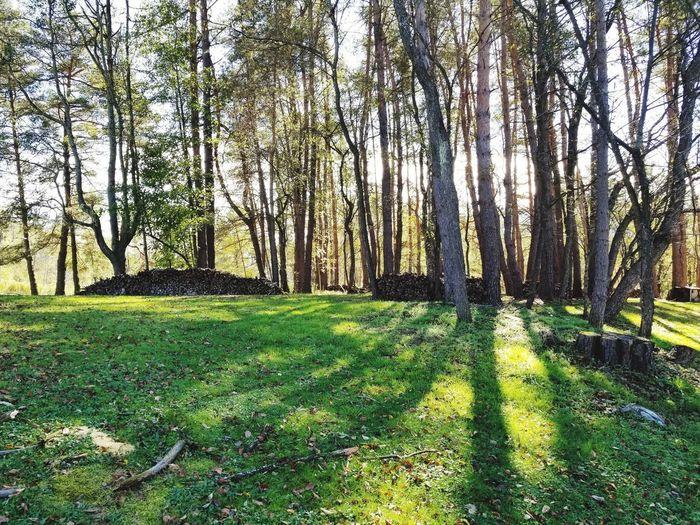 Tree Grove Wood