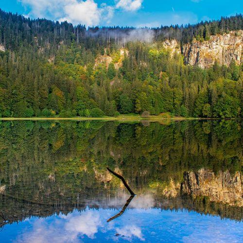 feldsee Feldsee Blackforest Schwarzwald Spiegelung Feldberg Nature Rural Scene Agriculture Tea Crop Pinaceae Sky EyeEmNewHere
