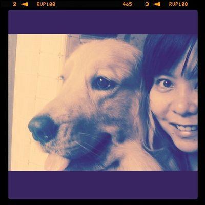 หอยโข่ง&Me Goldenretriever Hoykong Dog