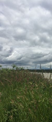 Vertical Pano of Fern Ridge Beauty In Nature Cloud - Sky Day Field Grass Green Color Growth Horizon Over Water Landscape Nature No People Outdoors Plant Rural Scene Scenics Sky Tranquil Scene Tranquility Vertical Panoramic Water