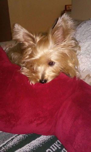 My Quinn Bear Cute Pets