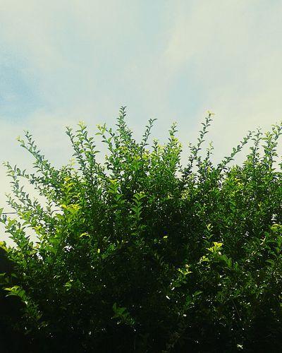 Sol, Calor ..