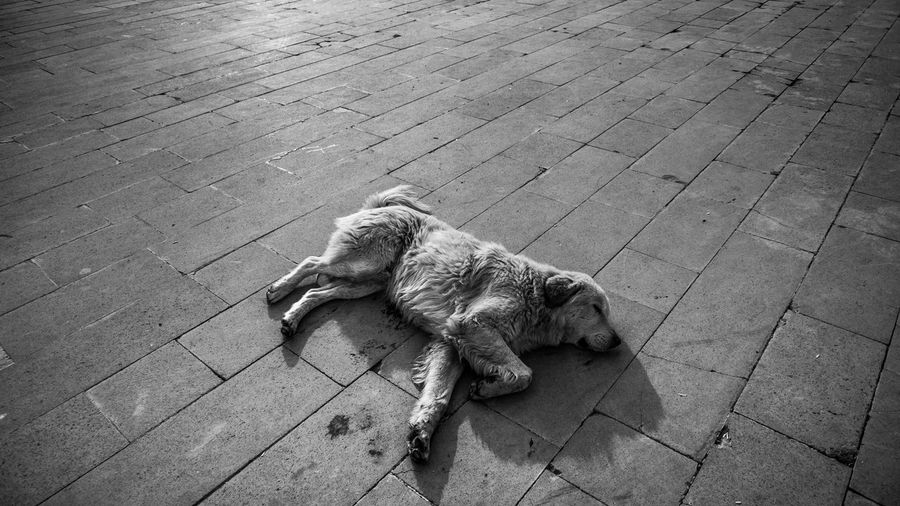 B&w Day Dog Mammal No People One Animal Outdoors Pets Streetphotography EyeEm Selects Sommergefühle The Street Photographer - 2018 EyeEm Awards