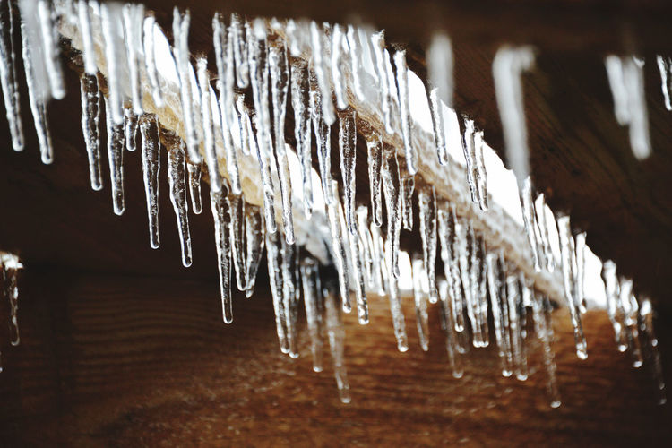 Close-up of icicles hanging on wood in winter