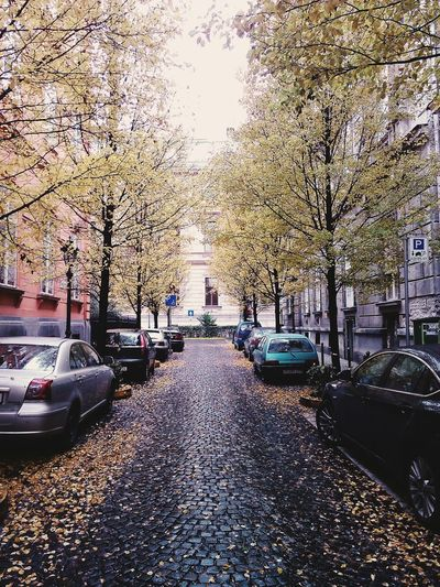 Nature Trees Street Autumn December