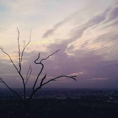 Lonely tree at the Sunset point at Chamundi hills mysore Lonely Lonelyplanet Exoticsofinstagram Lights Awesome Dothedew Fashion_ages Kannada Love Leaf Mysorediaries Mysurumemes