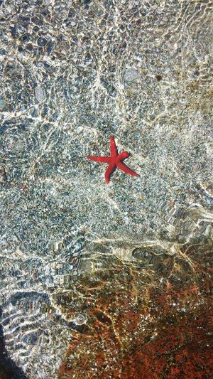 Red Beach Full Frame Sand High Angle View Starfish  Close-up