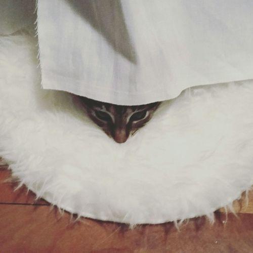 Titathecat First Eyeem Photo Beauty Love Zen Cats Cat White Escape View Calming Peace Pet Portraits