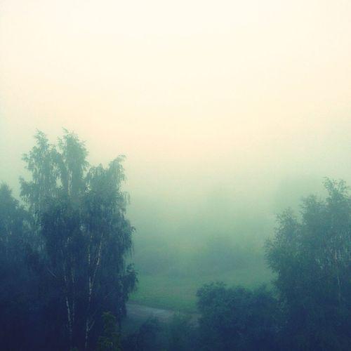 Good Morning Mist Misty Morning Showcase July