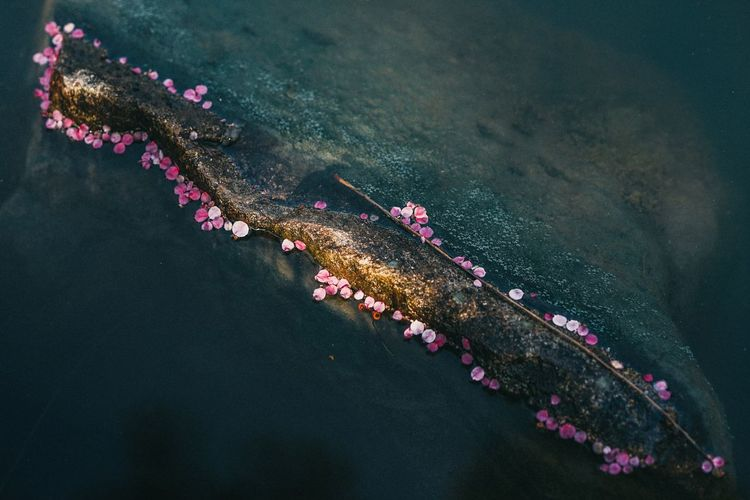 High angle view of flowers floating on lake