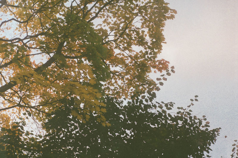 Low angle view of tree against sky