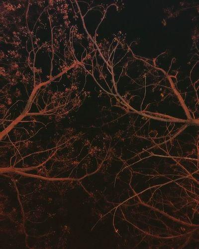 Noche Arboles Plants 🌱 Eyeemnaturelover Cielosdeespaña