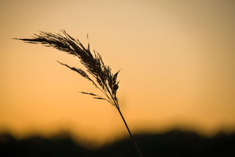 Marsh Grass Against the Sky at Sunset Sunset Sky Plant Growth Nature Focus On Foreground Beauty In Nature Tranquility Orange Color Close-up No People Landscape Silhouette Marsh Grass Copy Space Twilight