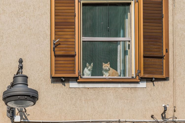Cats seen through window on sunny day