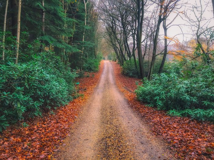 A walk in the Autumn Tree Plant The Way Forward Direction Nature Growth No People Tranquility Forest Beauty In Nature Land Road Autumn Tranquil Scene Diminishing Perspective Transportation Plant Part Change Leaf Day Outdoors Long