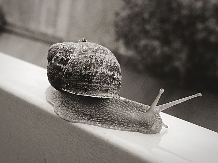 Check This Out Taking Photos of all the Snails on this Wet Day EyeEm Nature Lover EyeEm Best Shots - Black + White