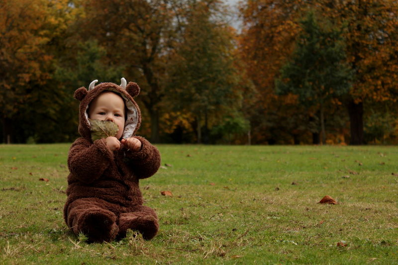Autumn Autumn Colours Baby Baby Bear Bear In Forest Brown Child Cosy Cute Baby Fall Grass Horizontal Nature One Boy Only One Person People