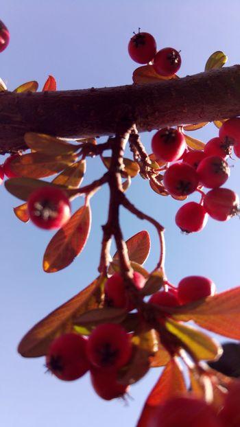Kırmızı Close-up No People Branch Tree Beauty In Nature Outdoors Day Nature Sky Nature Clear Sky Mavi Mutluluk Mavilacivertaşk Backgrounds Mavihuydurbende Mavic Pro Mavic Mavigökyüzü Full Frame Maville Rose - Flower Fragility Springtime Beauty In Nature Cloud - Sky