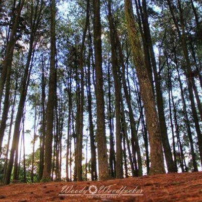 Riam Kanan. Visitkalsel Iamacreativ Thecreativmovement Landscape Tree Pine Sky Adventure Travel __________________________