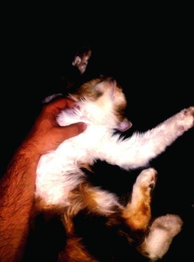 Mon-Chery my cat :)