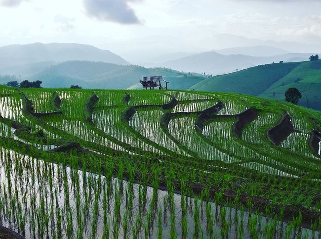 Social Issues Agriculture Field Environmental Conservation Pattern Farm Landscape Hill Land Scenics Crop  Rice Paddy Nature Cloud - Sky Plant Terraced Field Rural Scene Outdoors Asian Style Conical Hat Sky