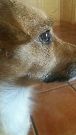 One Animal Pets Dog Animal Eye No People Femaledog Brown White Color Without Filters Green