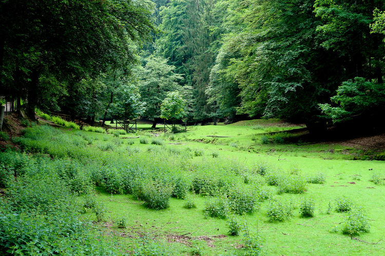 Wildpark Erbach Im Odenwald Brudergrund Valley Forest Wood Backgrounds Freshness Beauty In Nature Tree Growth Nature Grass Green Color